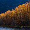 秋の上高地で紅葉ハイキング