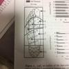 足底の皮膚受容器の役割