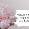 芍薬が咲かない。。!の対策。芍薬を咲かせる為のコツや秘訣をご紹介!