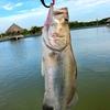 【備忘録】ホーチミンでバラマンディを釣る。釣り堀・場所と行き方まとめ。