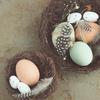なぜタマゴとウサギなのか?オーストラリアは大型連休ハッピーイースター!