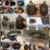 【Infomation】Second Reptile Garage Sale in Nerima