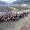 伐採木の売買