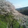 春の子連れ旅行 愛知・湯谷温泉、鳳来寺山、桜が絶景の桜淵公園