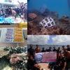 宜野湾沖で水中清掃とサンゴ植樹!