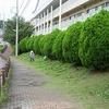 きれいな学校で迎えます 学校周囲の草刈り