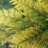 木曜日:恐るべしヒノキ花粉
