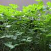 ゴールデンウィーク・出発準備編:鉢植えへの水やり