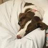 犬の判断と記憶 おとうさんが家で暮らす!