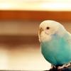 【Twitter】リプライ等の通知が相手に届かない という障害?