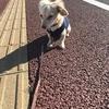 犬の散歩って難しいですね。(生後5か月です)