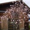 春「世界でいちばん美しい瞬間(とき)」