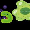 新型コロナウイルス 「感染7段階モデル」について その3 自然免疫と獲得免疫について 前編