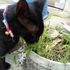 鹿児島の黒猫