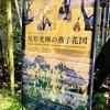 日本画の余白と時間軸について勝手に考察する―根津美術館・尾形光琳の燕子花図展―