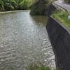 『西沢池』静岡県掛川野池群バス釣り完全攻略マップ