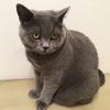 ストーカー猫、その名はマリモさん。