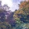 箱根の林道、晴れ雨晴れ雨🌤🌧☀️🌧