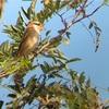 人気野鳥の宝庫…多摩川探鳥会!