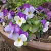弥生3月小さい春