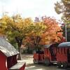「桜を見る会」と欅の紅葉を訪ねて