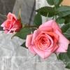 """【庭】Rosa.min """" Neza """""""