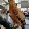 ソラモで再び出会った鷲と飼い主さん