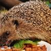 よく噛むだけで痩せる!ゆっくり食べるだけで消費カロリーが2倍に!