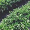 夏の暮らし:ゆとりを持つ