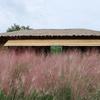 済州島(チェジュ島)フォトスポット #ピンクミューリーの咲く「休愛里自然生活公園」