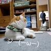 【可愛い猫画像】お父さんを見つめるえんは切ない表情【ペット】