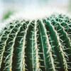 リーフでおでかけ!サボテンの町 春日井 都市緑化植物園【東海ドライブ】
