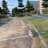 お散歩〜 ☀️
