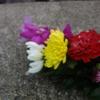 チタ紀行 〈戸塚ヨットスクール〉まで行って海に花束を投げ捨てた話