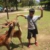 奈良公園に鹿が多い理由を、勝手に想像してみた?