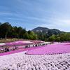 埼玉 秩父 羊山公園の芝桜 2019