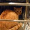 2012 9月 のら猫手術。 -元職場周辺TNR小休止へ-