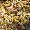 201121_近所の公園をお写んぽ。前編 望遠ズームレンズのM.ZUIKO DIGITAL ED 40-150mm F2.8