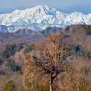 初冬の北信濃。柿と新雪の鹿島槍ヶ岳