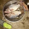 ソンクラン用に確保しておいた池で漁をしてみた…