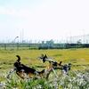 羽田空港←→奥多摩湖 182