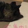 甲斐犬サンとネェネの休日の巻〜(*´ω`*)ナゴミ〜♬