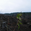 自分たちの手で水源の森林を育てよう!