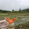 尾瀬ヶ原へハイキングに行ってきました。