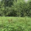 Tommy 2020 草刈リンピック 第一種目:丸山城跡傾斜草刈り