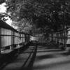 Photo No.266 / スーパーカブ
