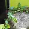 栃木県 なかが水遊園で水色のカエルを見てきました!どうしてみずいろ?原因は?