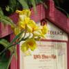 ポリネシアンレストランに咲く黄色い・・・