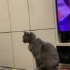 暖房の風を求める猫たち