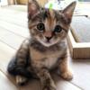 【注文住宅 猫との暮らし】犬派だった僕が保護猫と暮らしてみた感想。とお願いがあります。